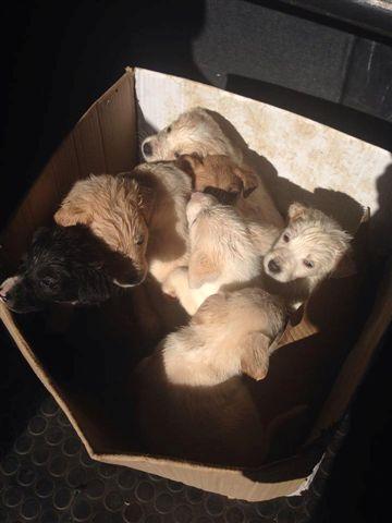 Otto cuccioli febbraio 2014 - 1