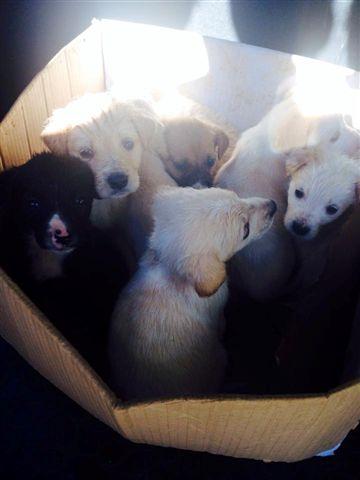 Otto cuccioli febbraio 2014 - 2