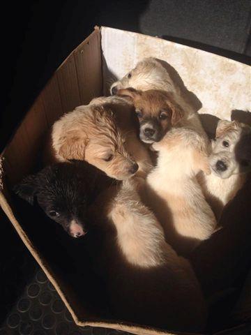 Otto cuccioli febbraio 2014 - 3