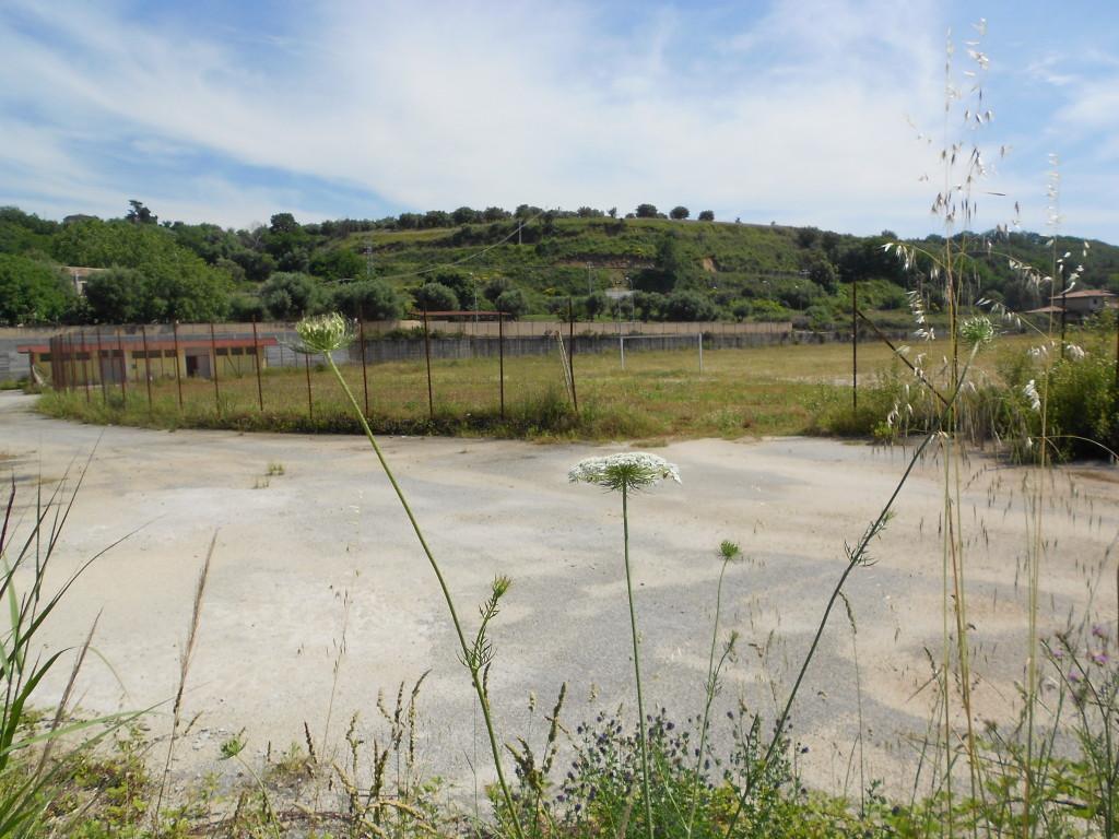 campo santangelo gugno2014 (3)