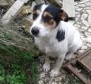 Cani Caria 4