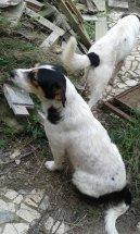 Cani Caria 7