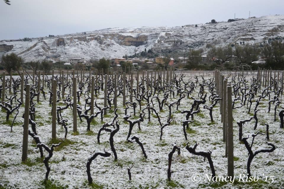 neve drapia e frazioni 090215 (35)