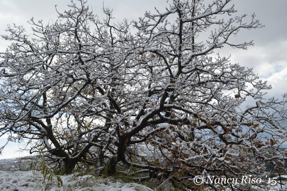 neve drapia e frazioni 090215 (4)