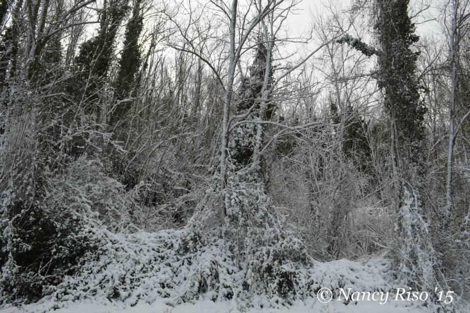 neve drapia e frazioni 090215 (6)