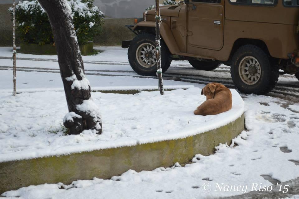 neve drapia e frazioni 090215 (7)