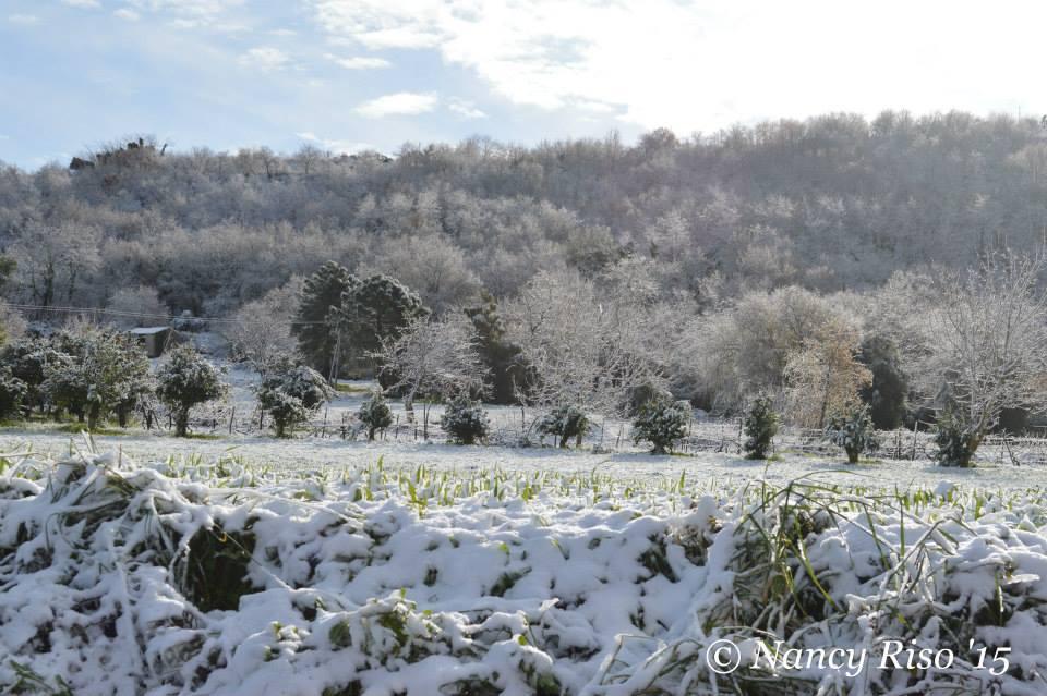neve drapia e frazioni 090215 (85)