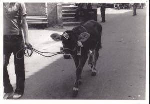 costa vitello