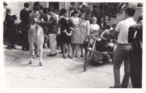vitella 1960