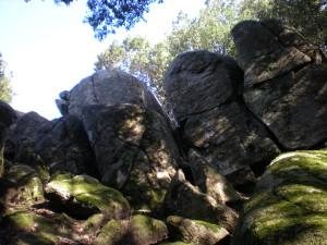 nardodipace (10)