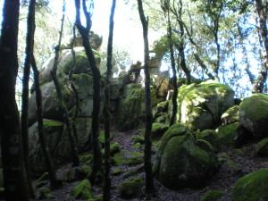 nardodipace (15)