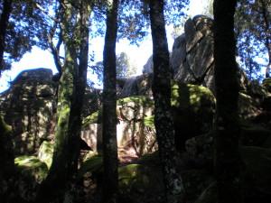 nardodipace (8)