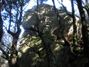 nardodipace (9)