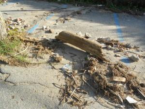 spiaggia formicoli (39)