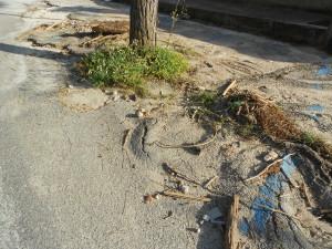 spiaggia formicoli (4)